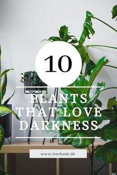 Our top 10 of plants that love dark spaces, read more on our plant-blog. That's Love, Rum, Planters, Spaces, Reading, Blog, Reading Books, Blogging, Rome