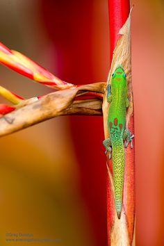 Gecko Time by Greg Boratyn