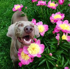 Budding florist.