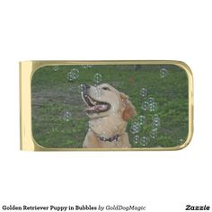 Golden Retriever Puppy in Bubbles Gold Finish Money Clip