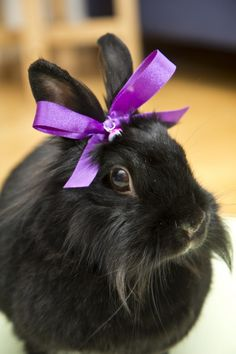 black fuzzy bunny rabbit, purple bow, what's not to love?