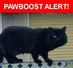 Is this your lost pet? Found in ,  . Please spread the word so we can find the owner!  Big cat  Nearest Address: Halsey 183