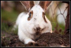 Printable, digital, photo, photography, rabbit, nature, colors, photoshoot, photograph, photographer, digital download, print, printing by ArtofLilla on Etsy