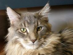 Cat of The Day July 17, 2015 http://www.freebiecat.com/cat-of-the-day.php