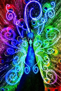 Neon rainbow manipulated photo of a peacock. Rainbow Colors, Vibrant Colors, All The Colors, Colorful, Rainbow Stuff, Rainbow Art, Neon Colors, Taste The Rainbow, Over The Rainbow