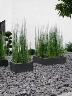 GARTEN Front garden design with horsetail Modern Garden Design, Backyard Garden Design, Landscape Design, Front Yard Landscaping, Landscaping Ideas, Garden Projects, Land Scape, Garden Inspiration, Indoor Plants