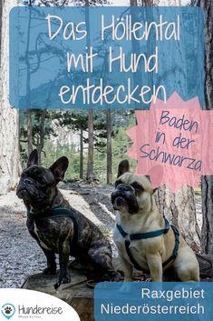 Travel Inspiration, French Bulldog, Wanderlust, Hiking, Nature, Roadtrip, Animals, Hotels, Europe