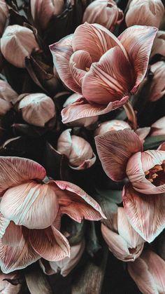 Flor Iphone Wallpaper, Wallpaper Pastel, Ed Wallpaper, Vintage Flowers Wallpaper, Iphone Background Wallpaper, Aesthetic Iphone Wallpaper, Flower Wallpaper, Nature Wallpaper, Aesthetic Wallpapers
