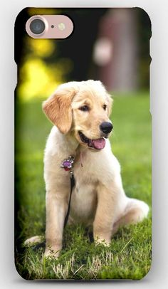 iPhone 7 Case Dogs, Grass, Puppy, Sitting