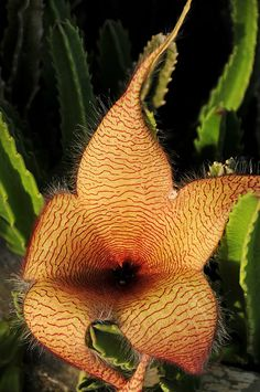 The Cactus Flower | Flickr - Photo Sharing!❤️