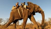 Elephant Back Safaris at Camp Jabulani, South Africa - One of the most amazing places I've ever been! African Elephant, African Safari, Game Lodge, Private Games, Game Reserve, Travel Companies, Life Is An Adventure, Future Travel, Continents