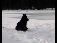 White Wolf : The Origin of the Beautiful Black Wolf