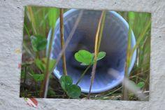 Neu im Shop: Klee-Becher  http://de.dawanda.com/product/48438014-Postkarte-Klee-Becher-von-Trashography