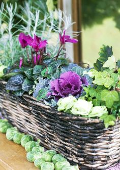 Outside Planters, Autumn Display, Small Outdoor Spaces, My Secret Garden, Autumn Garden, Garden Accessories, Fall Flowers, Autumn Trees, Autumn Inspiration