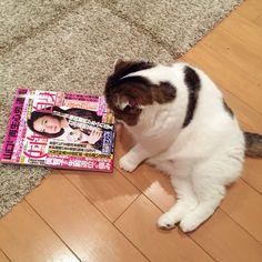 Checking human's magazine.