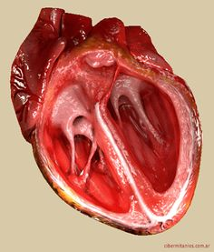 Scientists Use Stem Cells to Regenerate Layers of a Human Heart Rn School, Medical School, Nursing Tips, Nursing Notes, Medical Students, Nursing Students, Cardiac Nursing, Human Heart, Medical Assistant