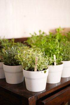 Give away herb starter kits so your guests will have a never-ending supply for their kitchen.  Photo by Alexandra Meseke Photography via Style Me Pretty