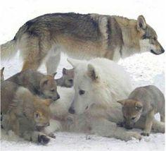 Great Family Pic <3  Plus de découvertes sur Le Blog des Tendances.fr #tendance #cute #animaux #blogueur