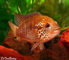 4597 Best Aquarium Freshwater Images Aquarium Fish Beautiful