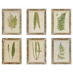 6 Piece Fern Framed Wall Art Set