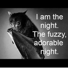Bats are wonderful creatures. I don't see how anyone would fear them. Creatures Of The Night, Cute Creatures, Beautiful Creatures, Animals Beautiful, Animals And Pets, Baby Animals, Funny Animals, Cute Animals, Animal Fun