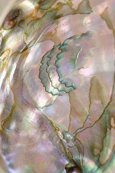 Mineral Photography  Print 065  Abalone   by ShineHausCollective