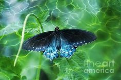 """Over the Water"" Copyright Carol Groenen #butterfly #butterflies #natureabstract"