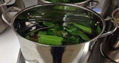 Es diabético? Sólo tiene que hervir las hojas y tomar este té para resolver el problema de la diabetes sin medicamentos!