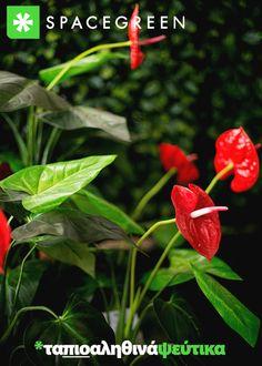 Plant Leaves, Nature, Plants, Inspiration, Biblical Inspiration, Naturaleza, Plant, Nature Illustration, Off Grid