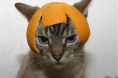 Cats with Fruit Hats | cats with fruit hats