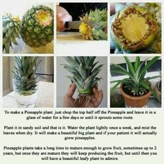 Grow pineapple plants.  I have only had one so far but have five more plants I am waiting on. It took about two and a half years to get my first pineapple.  It was small but really sweet.