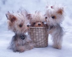 Rare OOAK Ma'Sal Creation *Baby Triplet Yorkie Puppies