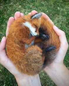 ❤️ for my sweet fox loving *family* in Atlanta ❤️ Needle felted sleeping. - ❤️ for my sweet fox loving *family* in Atlanta ❤️ Needle felted sleeping fox sculpture - Needle Felted Animals, Felt Animals, Needle Felting, Animals And Pets, Nuno Felting, Felt Fox, Wool Felt, Felted Wool, Felted Scarf