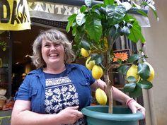 Adoquines y Losetas.: Limones