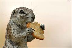 """Little Cracker-Thief"" by Elmar Weiss, via 500px."