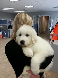 Great Pyrenees is fluffy - such a sweet baby!