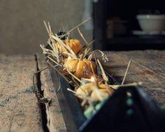 Vintage Whites Market: DIY Fall Centerpiece--white/mercury glass pumpkins + moss maybe? Vintage Thanksgiving, Vintage Fall, Fall Home Decor, Autumn Home, Autumn Table, Glass Pumpkins, Craft Corner, Fall Halloween, Haunted Halloween
