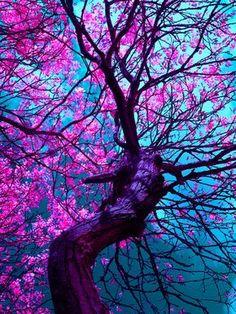 Great tree, love the colors. Somos igual que un árbol, excepto que nosotros no florecemos...no tan seguido.