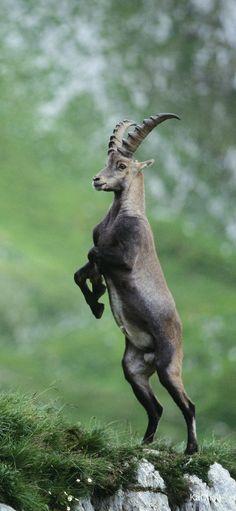 Animal Posters, Mundo Animal, Fauna, Animals Beautiful, Mammals, Hd Wallpaper, Baby Animals, Scenery, Wildlife