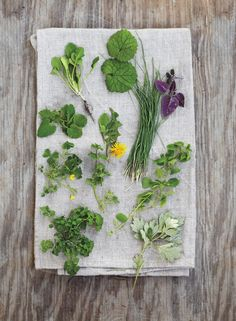 Post on Foraging Wild Greens Photo: Clockwise from top: garlic mustard, wild garlic, lavender bergamot, chickweed, mugwort, cardamine, wood sorrel, dead nettle, garlic pennycress. Center: dandelion (top), henbit (bottom).