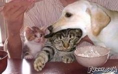 The smaller cat's face....priceless!!!!