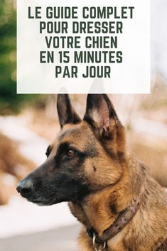 Dresser son chien en 15 minutes par jour Discover the complete guide to educate your dog in 15 minutes a day only! York Dog, Malamute Puppies, Alaskan Malamute, Learn Yoga, Basset Hound, Shiba Inu, Training Your Dog, Animals And Pets, Dog Tags