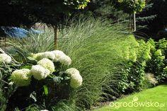 Pokażę nasz ogród - strona 330 - Forum ogrodnicze - Ogrodowisko