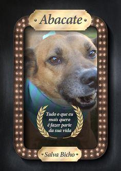 O Abacate é um cãozinho muito fofo e brincalhão! Ele adora um chamego e retribui com muito amor. Mas o que ele tem de melhor é a sua fidelidade. Abacate está te esperando na ONG Salva Bicho Curitiba. Contato: www.facebook.com/salvabichocuritiba