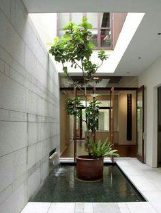 Trồng cây trong nhà - phongdm.com