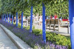 Blue Trees beside St Pauls, London. (2013 Trip)