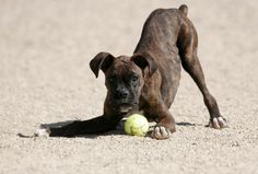 """A question I am often asked is, """"Should I take my dog to the dog park (or dog daycare)?"""" Here's what you should know..."""