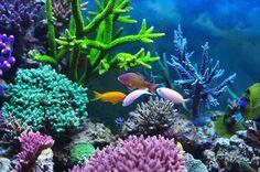 seaweed coral - Google Search