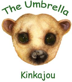 The Umbrella Mask -- Kinkajou -- Jan Brett