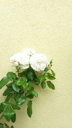 #flower #tumblr #aesthetic #pinterest #selfmade #beautiful #background